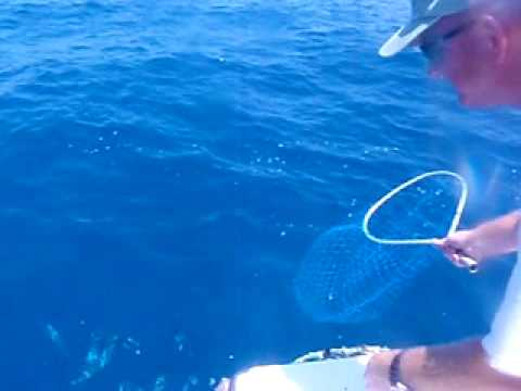 Free Netting Fish Offshore