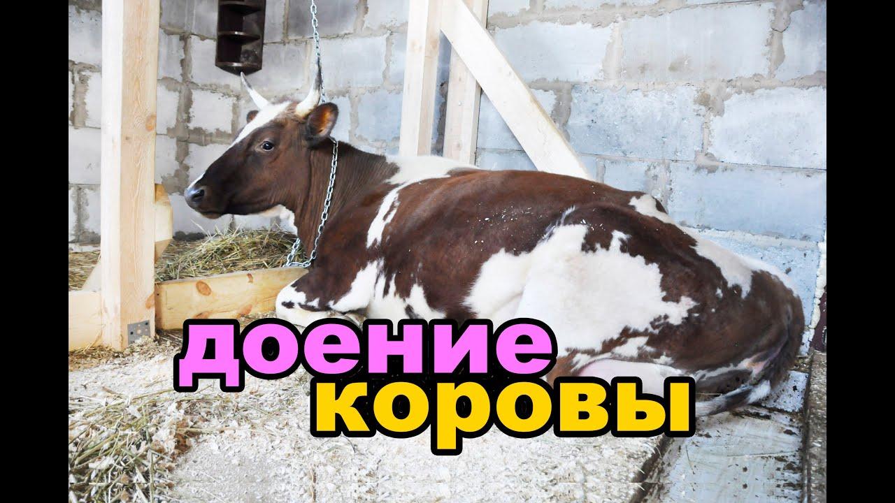 Электронный доильный аппарат imilk401. 145 000 руб. В наличии; 07. 12. 17. Для фермеров и хозяйств, которые работают как на привязной системе содержания так и безпривязной, и желают вести учет продуктивности и состояния здоровья от каждой коровы, разработана доильная система imilk4o1.
