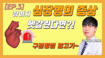 [EP.3] 강아지 심장병의 증상들 햇갈린다면?! 정확한 구분방법! [우리동네수의사]