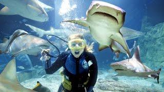ЖИВОТНЫЕ НАКАЗЫВАЮТ ЛЮДЕЙ ЗА НАГЛОСТЬ (Подводный выпуск)