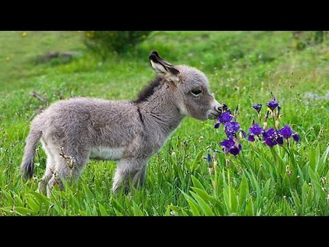 Cute Baby Donkeys █▬█ █ ▀█▀