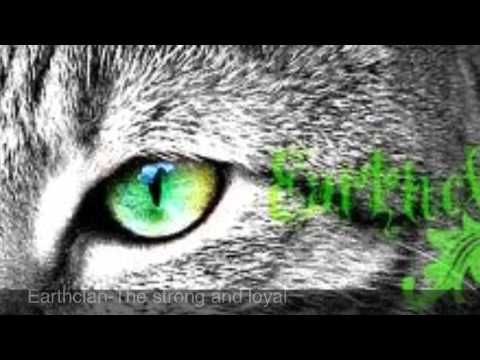 Best warrior cats roleplay website