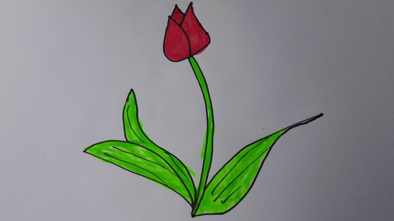 how to draw a tulip draw a tulip step by step with pencil draw tulips in a vase