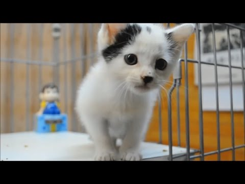 ♥ Kittens CUTE Kittens video compilation ♥
