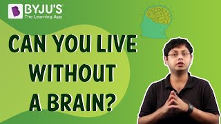 Can You Live Without a Brain?