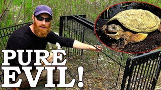 Catching VICIOUS Pond Turtle (Seriously Angry!) | Exterminating Predators in the Pond