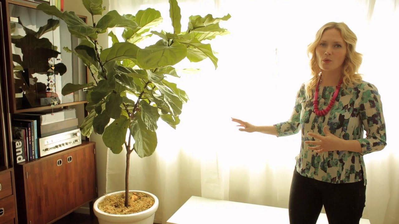 How To Create An Indoor Plant Garden