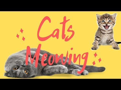 Cats Meowing 2019 - The best videos of cats (COMPILATION CUTE CATS)