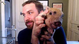 Why You Shouldn't Get a Mini Pig
