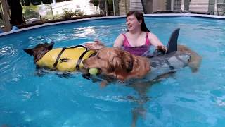 "Ilsa and Niko in ""Heatwave! Dog Pool Party Music Video"""
