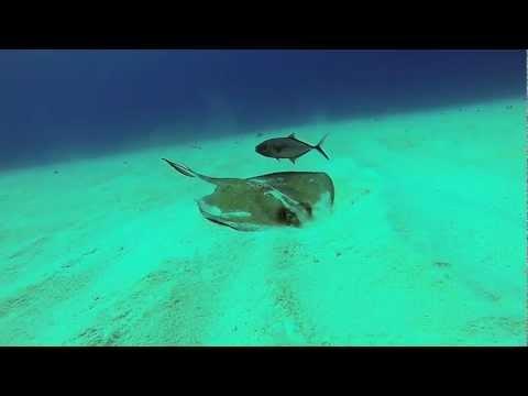 Cayman Brac, Southern Stingray M/V Keith Tibbetts GoPro HD