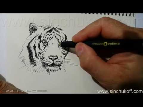 Как нарисовать белого тигра карандашом поэтапно