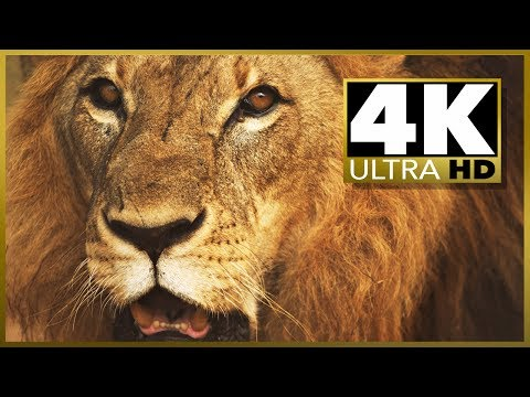 4K ULTRA HD TEST, short movie demo