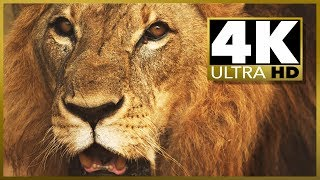 Sample 4k UHD (Ultra HD) video download