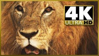 Ultimate 4k Ultra Hd Oled Sampler Videotest Demo, Stock Video Footage