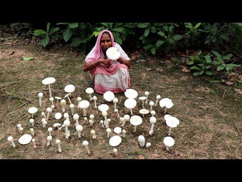 Finding Natural Mushroom and Cooking by our Grandmother | Wild Mushroom Recipe | Village Food