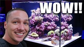 I NEVER thought this would happen! Now I want a REEF AQUARIUM!