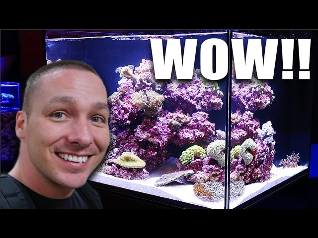 i-never-thought-this-would-happen-now-i-want-a-reef-aquarium