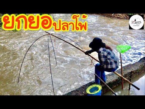 ยกยอ น้ำจุน Fishing lifestyle Ep.119