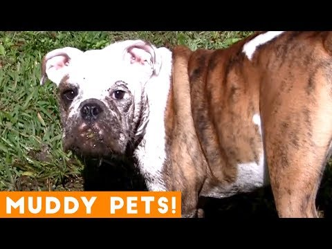 Funniest Pets Playing in Mud Compilation | Funny Pet Videos