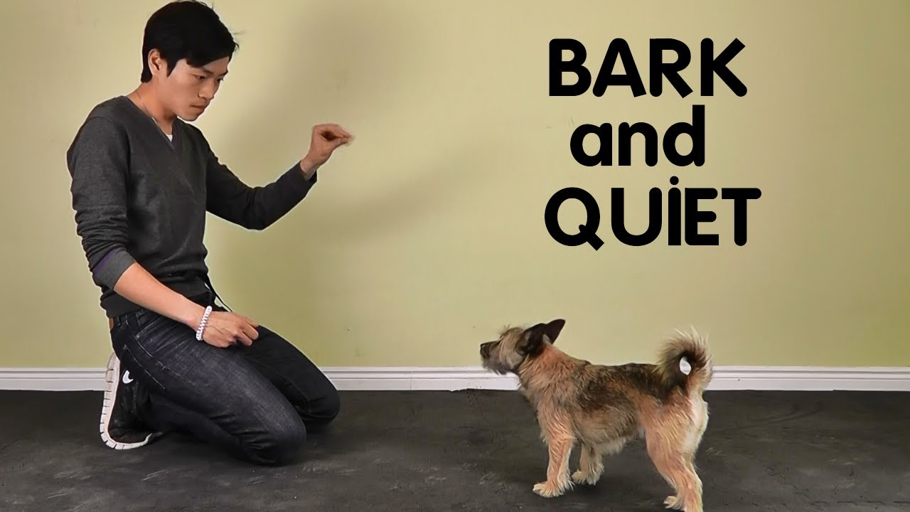 Teach Dog to Stop Barking - Treatpouch.com - YouTube | Training Dog To Not Bark