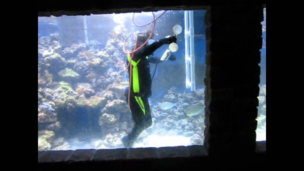 Cleaning Bill Wann's 20,000 Gallon Aquarium   YouTube