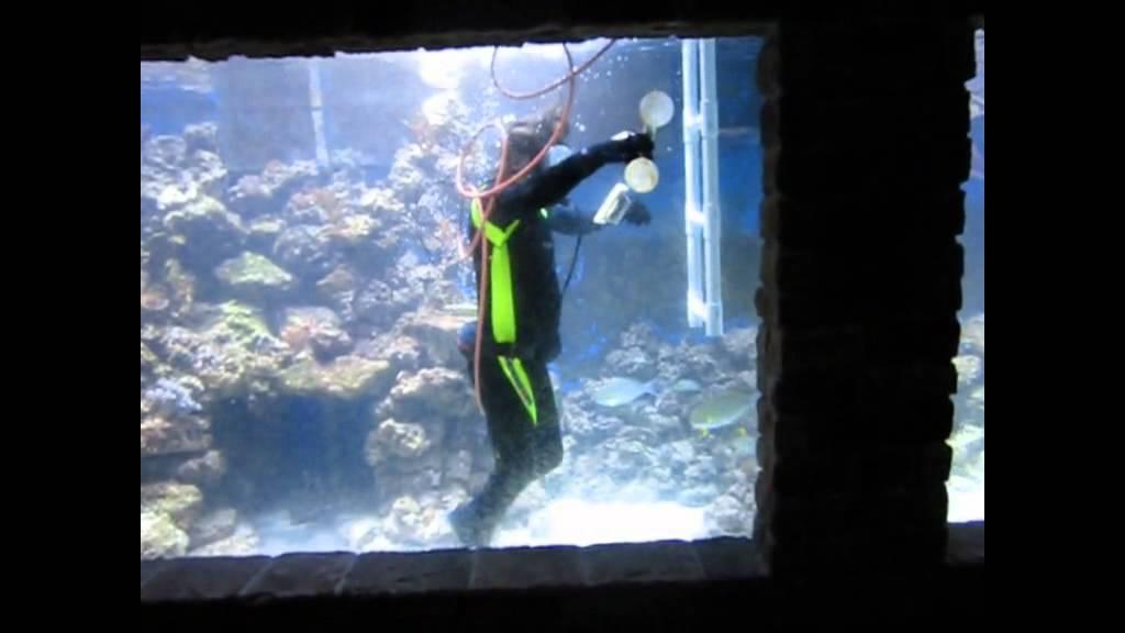 10 000 Gallon Fish Tank For Sale 50000 15000 Gallon