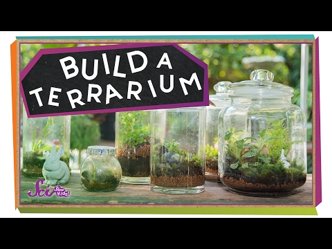 How To Set Up Terrarium Kit For Kids Keelan S Corner Ok4kidstv
