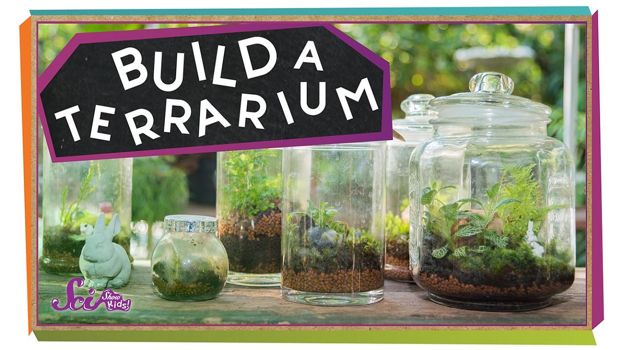 medium resolution of Teacher and Student Resources   Lyon Arboretum
