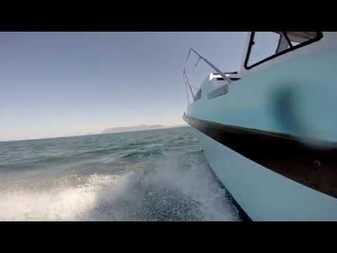Cape Town Shark Tour