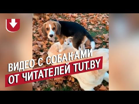 Любитель картошки игрязнуля. Посмотрите, какие собаки живут учитателей TUT.BY