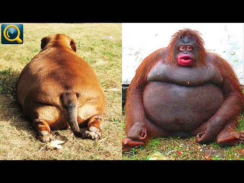 10 Lovely Fat Animals in the world