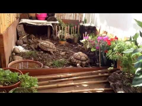 Tortuguero casero de jardin tortugas taricayas doovi for Tortuguero casero