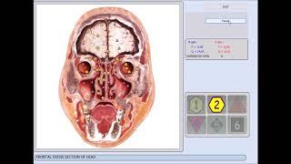 software vector protocolo expres analisis rápido y terapi