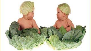 Mẹo Vặt Cuộc Sống - Bạn có biết bắp cải ảnh hưởng đến sức khỏe bạn như thế nào?