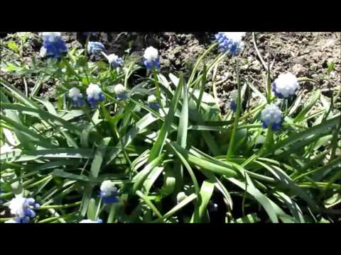 Автоматичний полив на Флориум. Florium.ua - YouTube