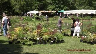 Ardèche - Grospierre, plantes et fleurs en fête