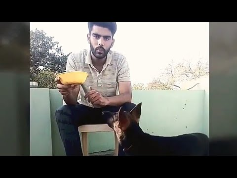 How to give food permission training to your dog in hindi