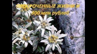 300 млн. рублей впустую: набережная реки Сочи снова в упадке