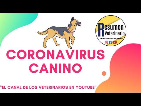 Coronavirus Canino