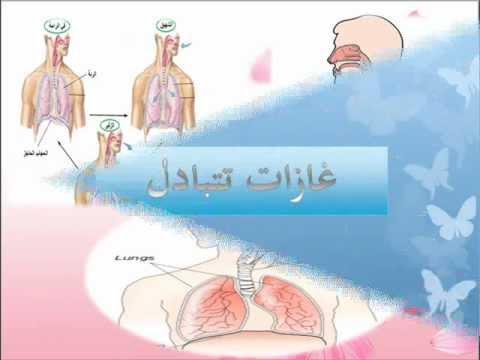 جهاز التنفس - بيولوجيا الانسان
