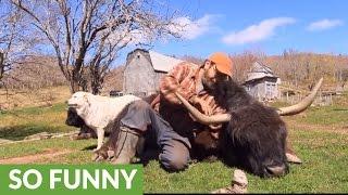 Inspiring story of an unusual animal friendship