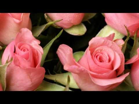 Розовые розы. Язык цветов роз. Релакс ТВ5