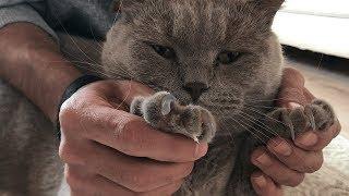 Kedi Tırnağı Nasıl Kesilir? Kedilerimin Tırnaklarını Kestim!