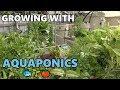 Aquaponic Update | Deep Water Culture, College of Aquaponics & More