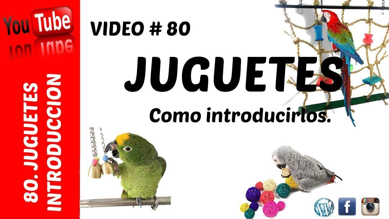 Introducirlos Juguetes Aves Juguetes Aves Introducirlos Como Como Para Para Juguetes vNm0n8w