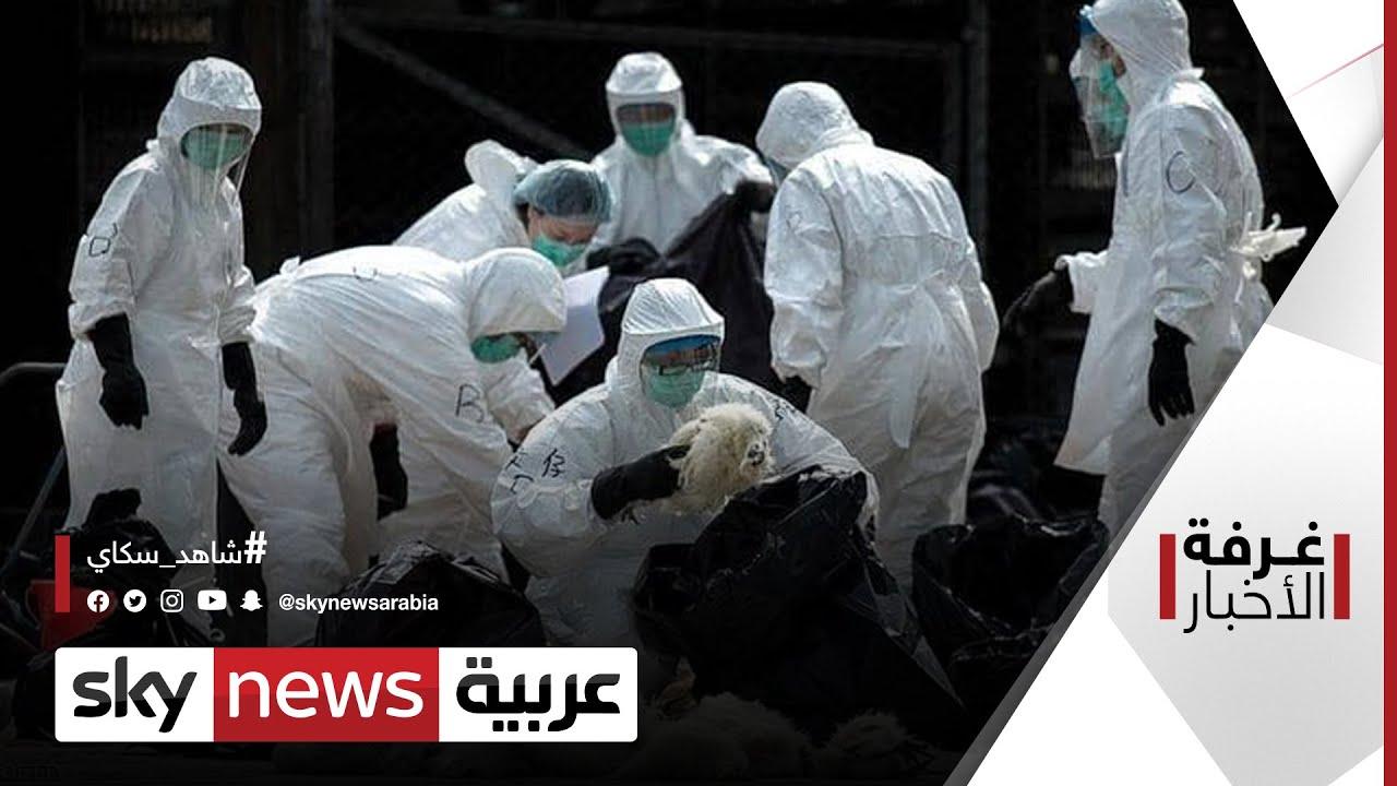 إنفلونزا الطيور.. بلبلة حول تفشيها بين البشر | غرفة الأخبار  - نشر قبل 13 ساعة