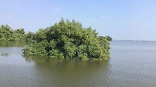 Sleeping Bird Song with Gentle Seaside Winding Sound หลับง่ายด้วยเสียงนกเสียงลมอ่อนธรรมชาติชายทะเล
