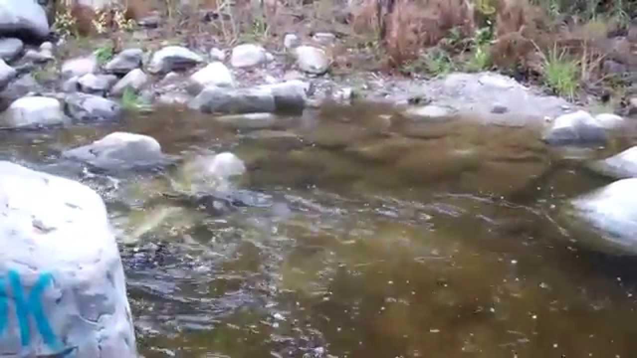 Big tujunga creek fishing 2015 youtube for Lytle creek fishing