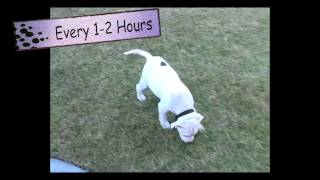 Dog Training: Housebreaking In 3 Simple Steps